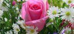 خرید گل از گل فروشی آنلاین بانک گل